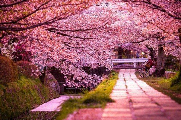 18 sự thật thú vị về đất nước Nhật Bản có thể bạn chưa biết