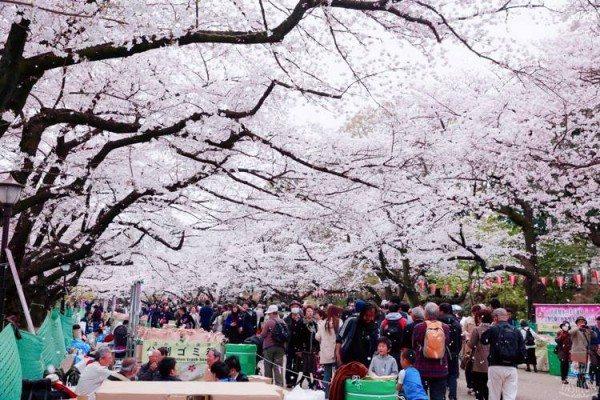 Du học Nhật Bản chi phí thấp nhất